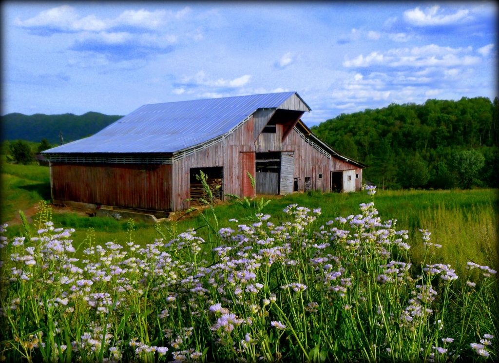 Blooms in front of the Barn by calm
