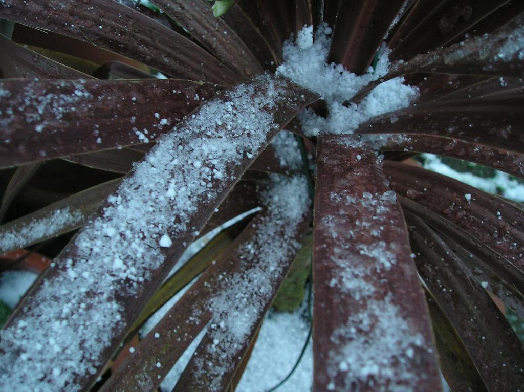 Chilly by Scrivna