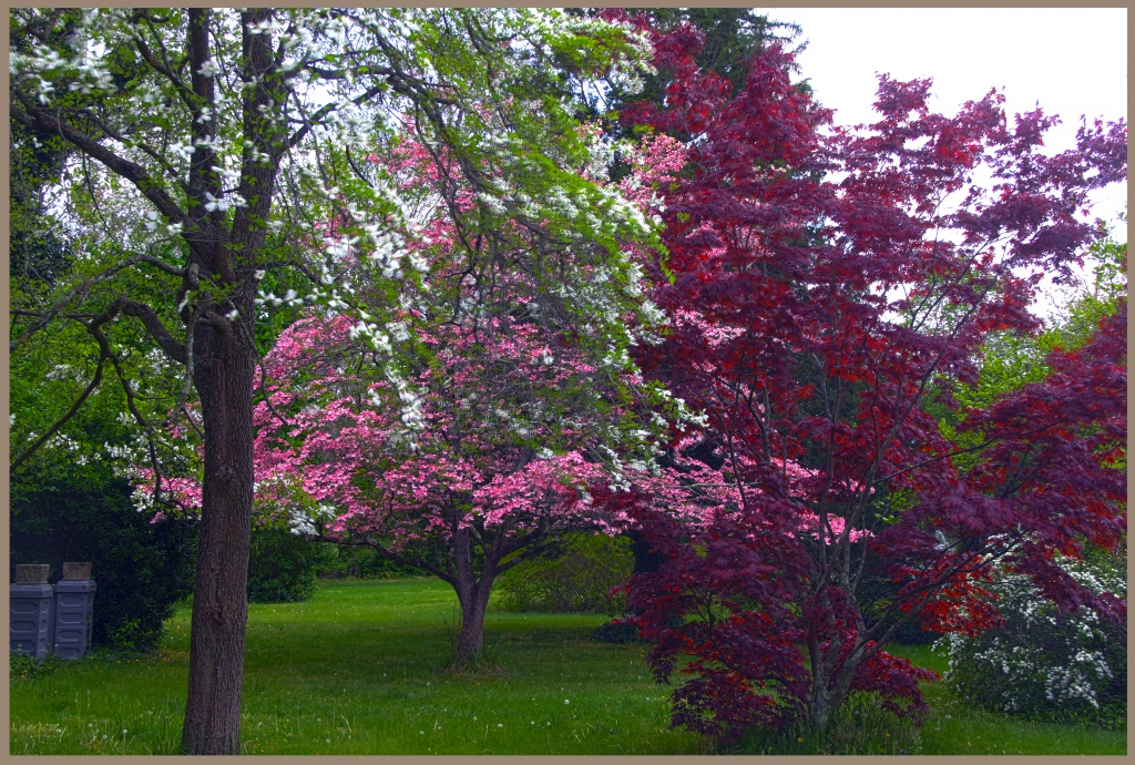 Flowering Trees by hjbenson
