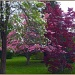 Flowering Trees by hjbenson
