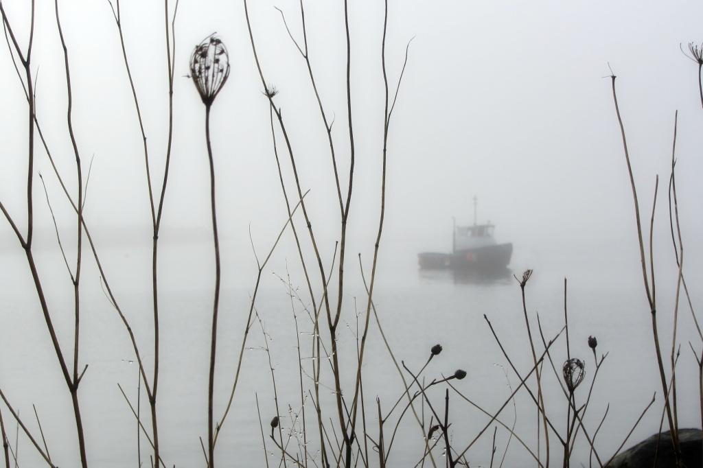 Morning fog. by jgoldrup