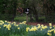 26th Apr 2012 - Waiting to pounce