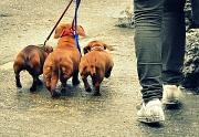 28th Apr 2012 - Walkies!