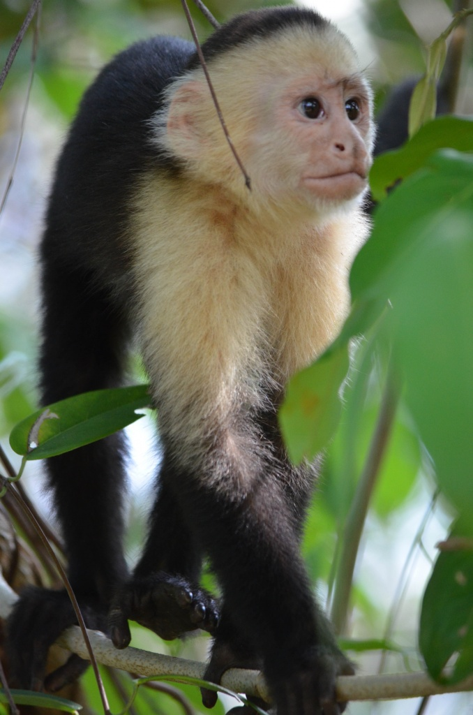 Monkeys All Around by lesip