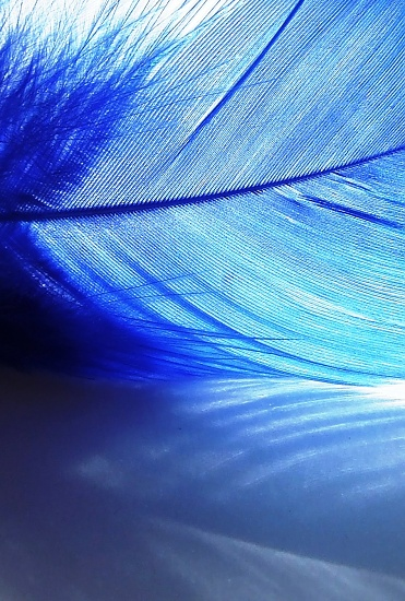 Blue feather by boogie