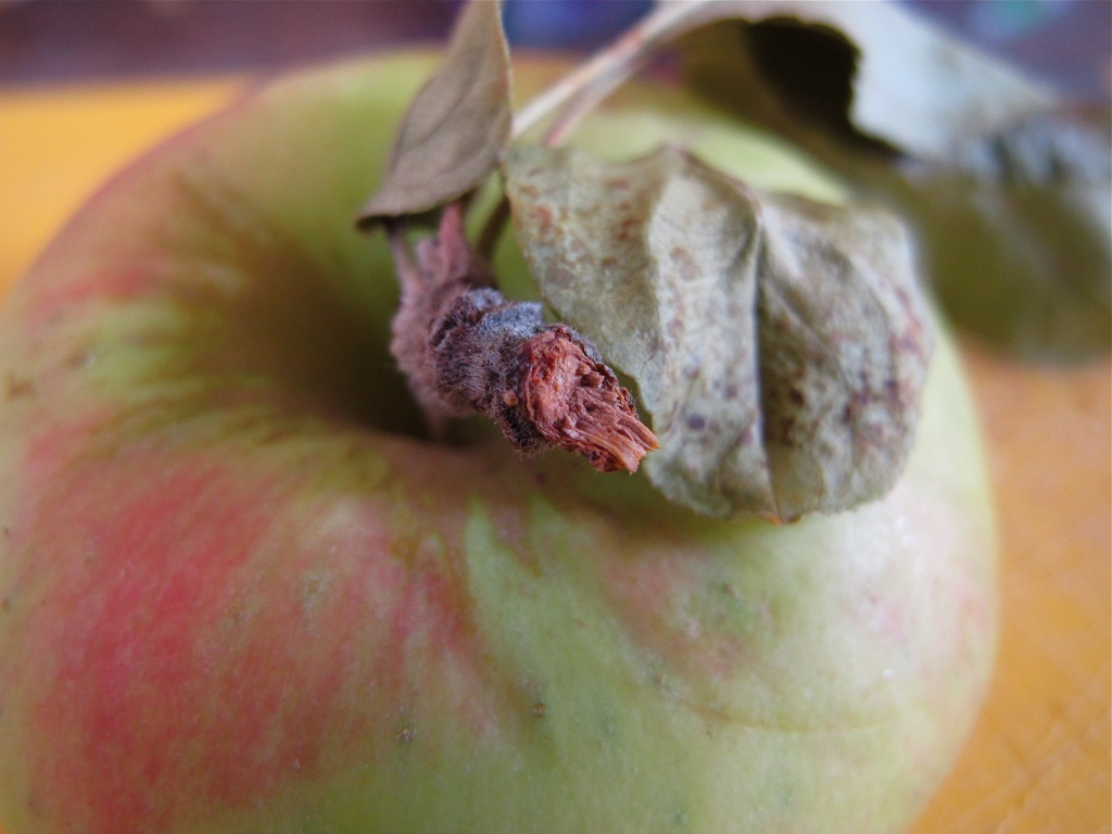 Apple (alternate) - April A challenge by alia_801
