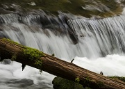 1st May 2012 - Sweet Creek Falls