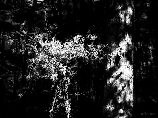 In the woods - where the shadows are deep and the light is magical... by marlboromaam