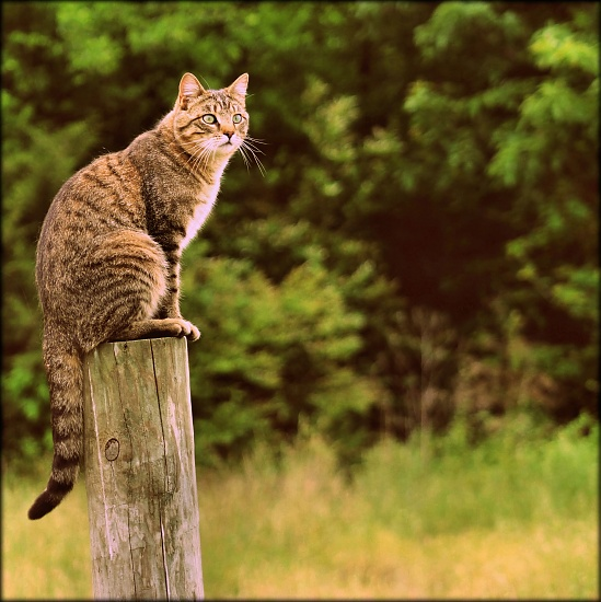 King of the fence post by cjwhite