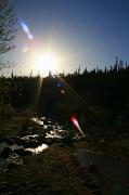 5th May 2012 - Saguaro Silhouettes
