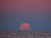 6th May 2012 - Pink Moon
