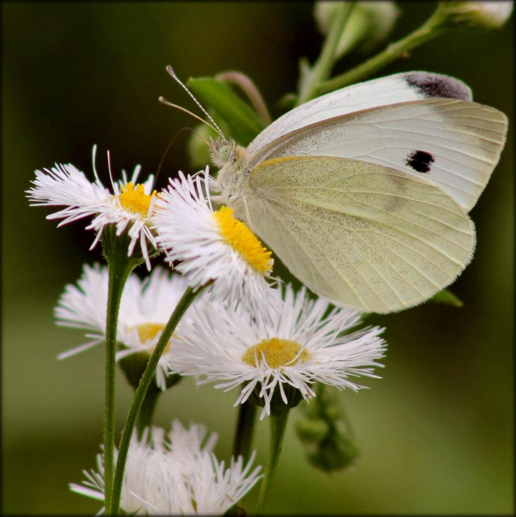 Slow Flutter by cjwhite