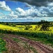 yellow fields, cloudy skies by jantan