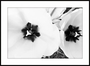 8th May 2012 - Black and White Nature