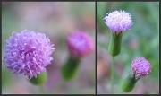 21st Jun 2010 - Yesterday's Weeds