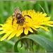 The Pollinator by carolmw