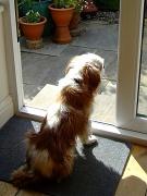 9th May 2012 - Old pooch