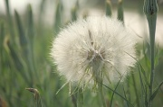 8th May 2012 - Dandelion's Big Brother