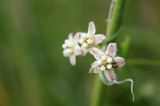 9th May 2012 - Odd Little Flower