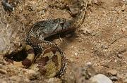 11th May 2012 - Snake