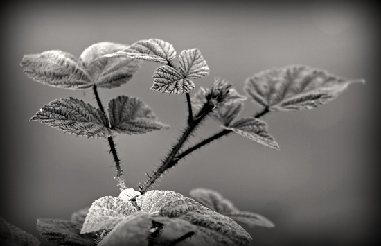 Light And Shadow In Greys by digitalrn