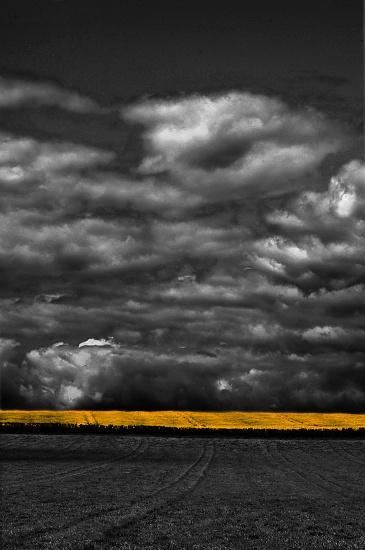 Yellow flash by seanoneill