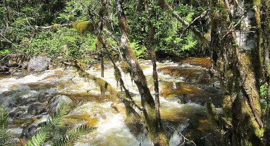 Grey Creek by pamelaf