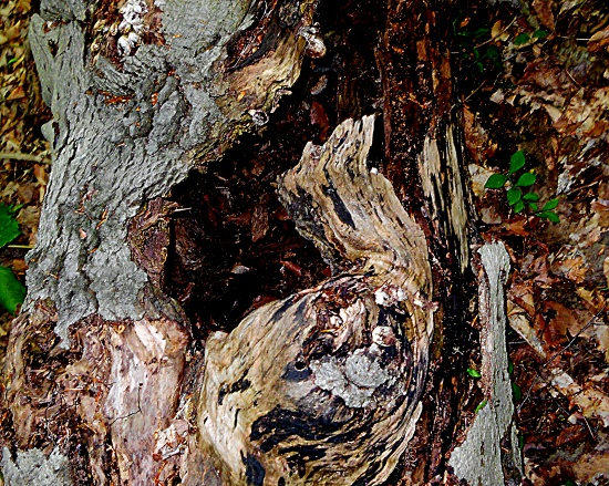 Camouflage (tree bark abstract) by yentlski