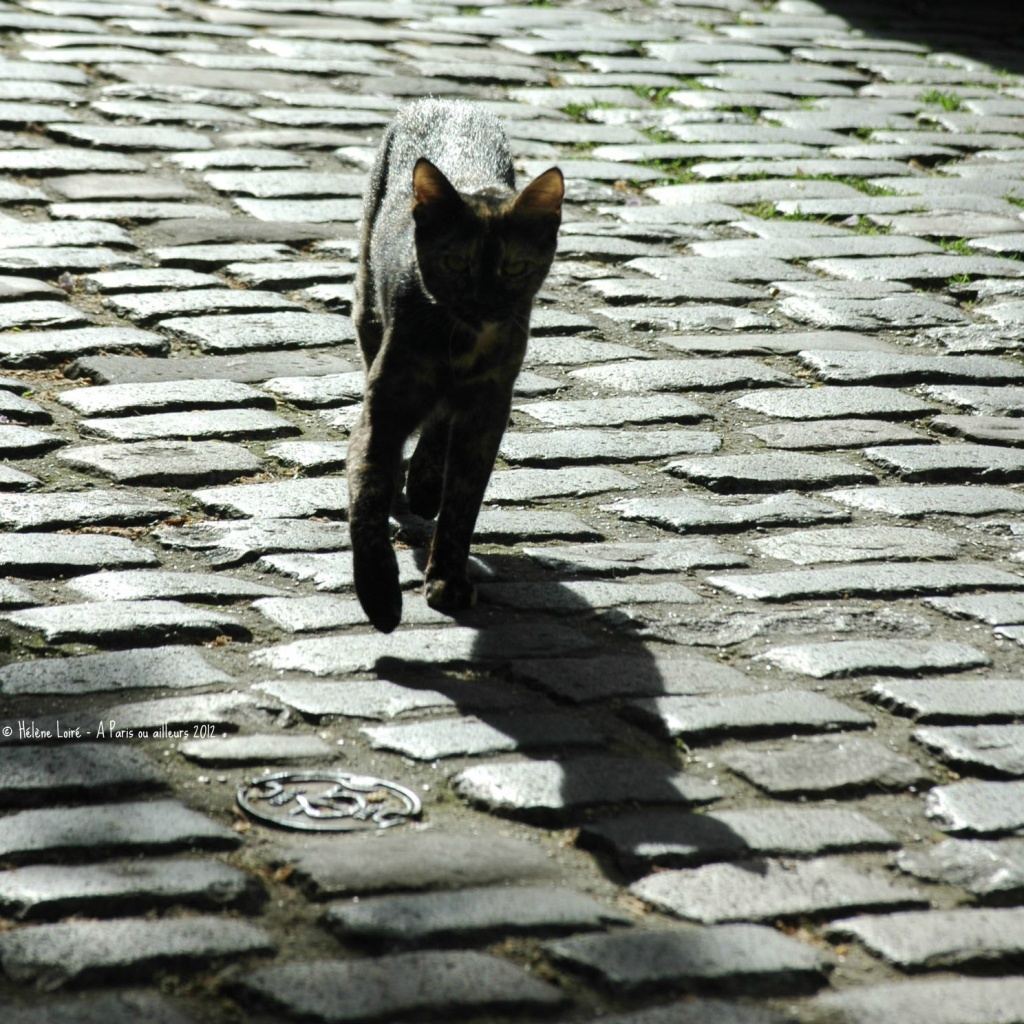 The little cat and its shadow by parisouailleurs