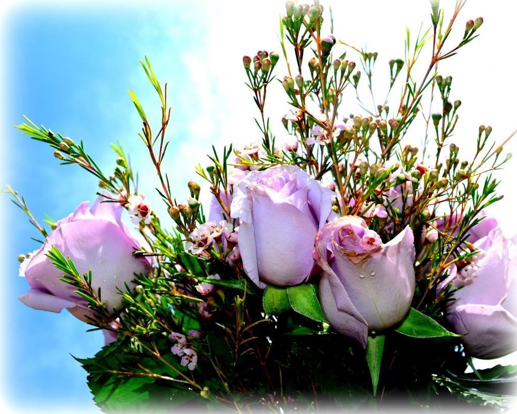 Roses for Mothers Day by myhrhelper