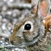 """""""Tell me little bunny is it true about your ears?"""" by sailingmusic"""