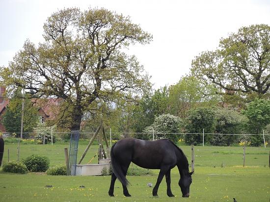 Black beauty in a country scene by rosiekind