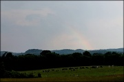 18th May 2012 - Cows at the end of the rainbow