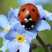 Ladybird blue by janturnbull