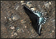19th May 2012 - Butterfly