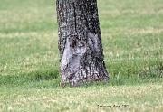 24th May 2012 - Funny Tree Face