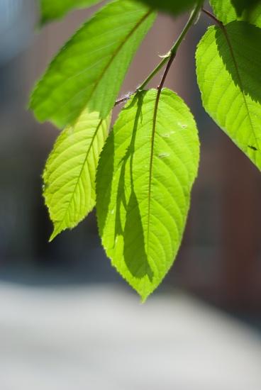Overhanging leaves by manek43509