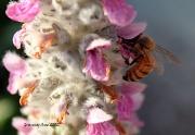 25th May 2012 - Bee Still