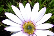 26th May 2012 - Tiny florettes