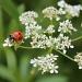Ladybird, Ladybird by judithg