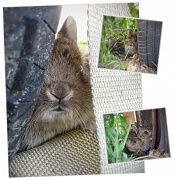 28th May 2012 - Bunny!