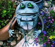 28th May 2012 - Waiter Frog