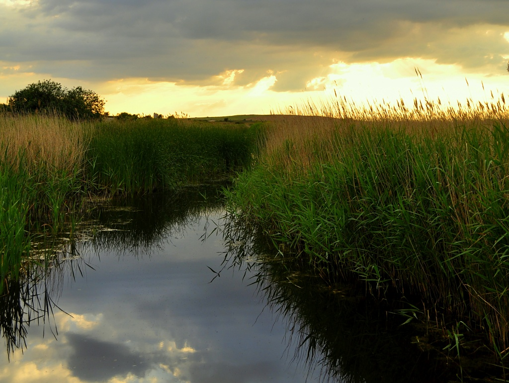 Reed Bed by andycoleborn