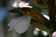 29th May 2012 - Weird Flower