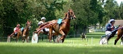 28th May 2012 - Horse race