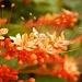 A Splash of Orange by myautofocuslife