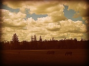 28th May 2012 - horses