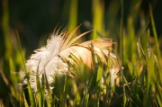 28th May 2012 - Soft Feather