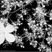 31.5.12 Hydrangea by stoat