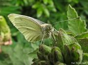 2nd Jun 2012 - Butterfly